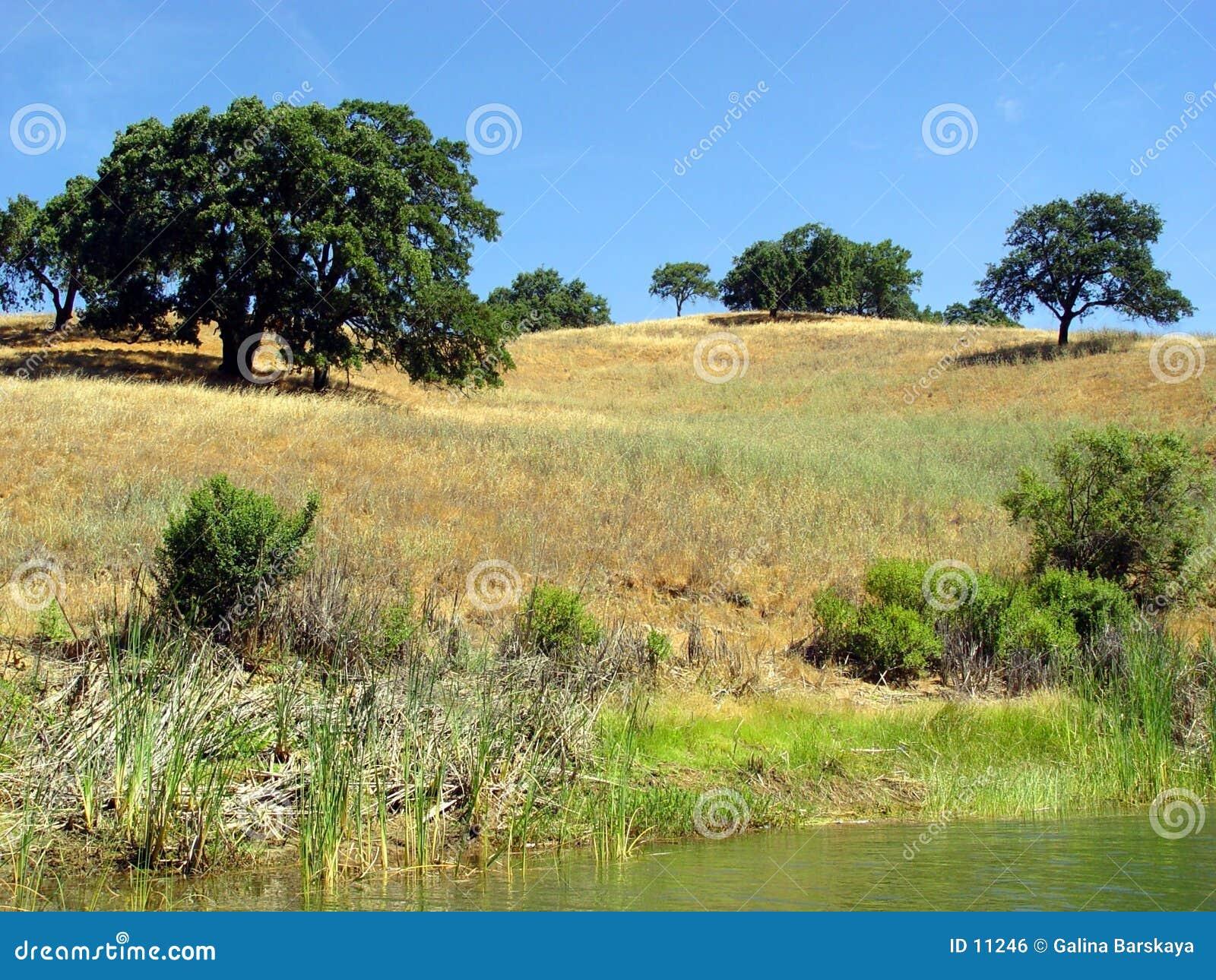 Kalifornien-Hügel (2)