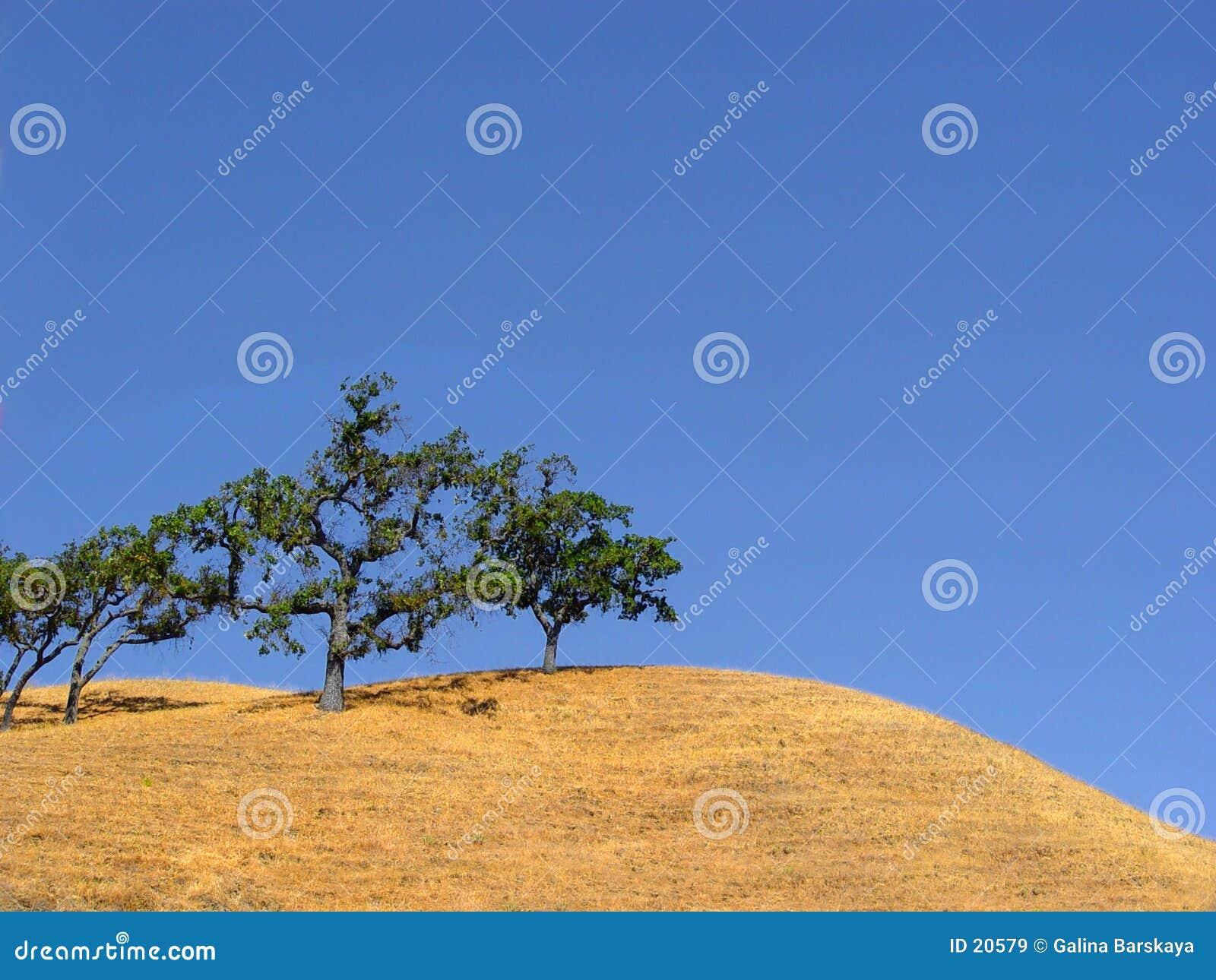Kalifornien-Hügel und Bäume