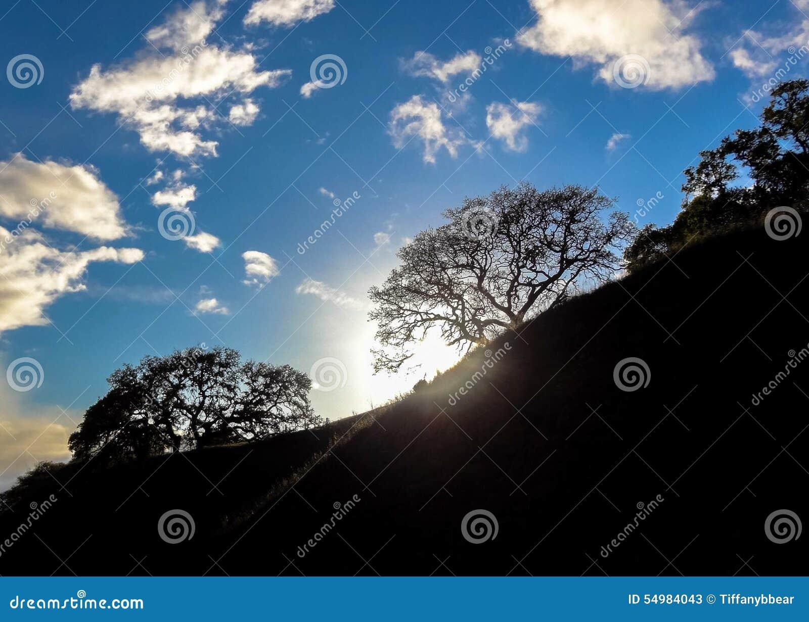 Kalifornien landskap Solsignalljus till och med ett träd