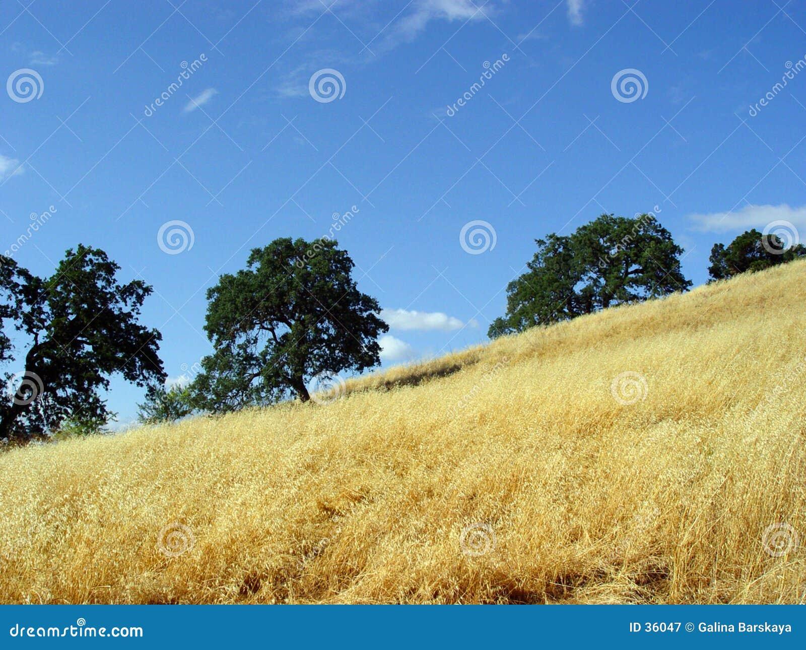 Kalifornijskie wzgórza