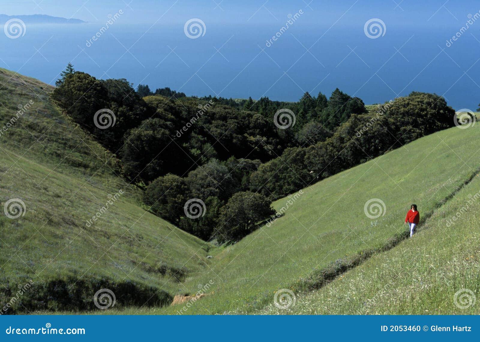 Kalifornijskie wzgórza wędrownej