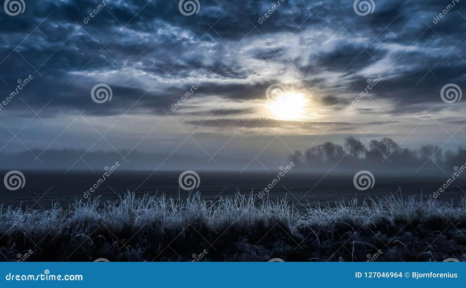 Kallt dimmigt landskap, fält i soluppgången frostigt gräs