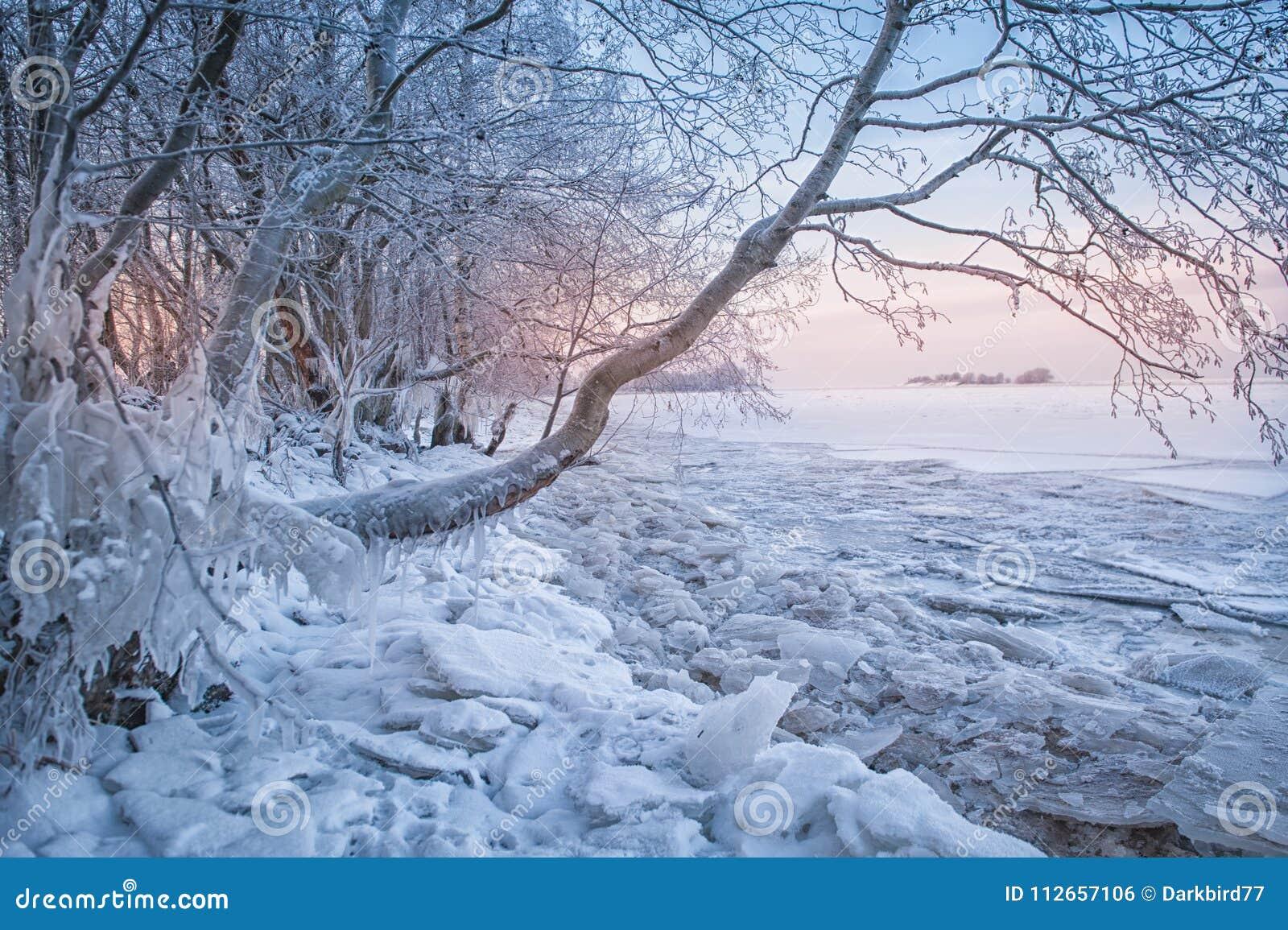 Kallt vinterlandskap med snö, is och trädet