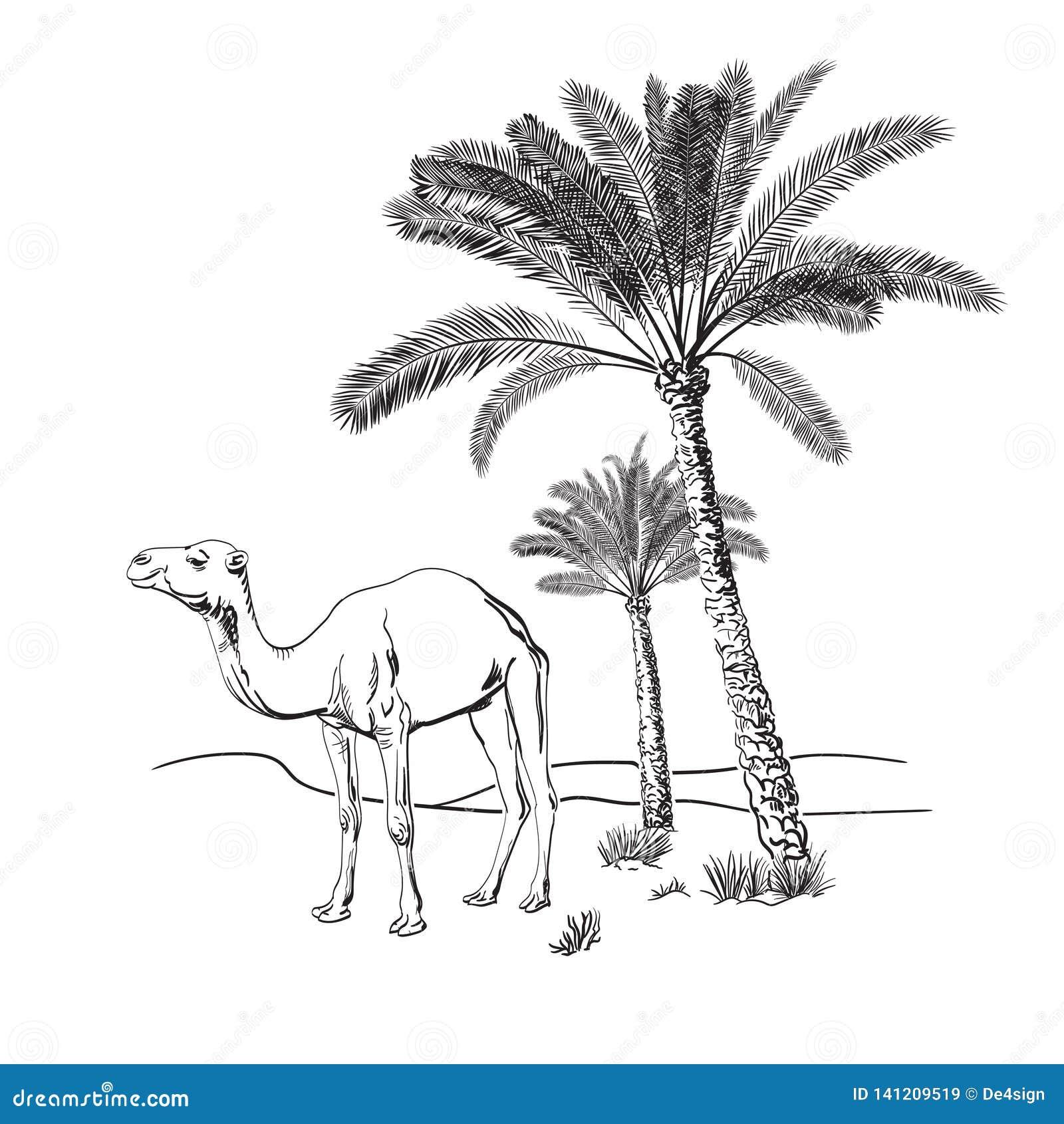 Kameel en palmen in de woestijn Hand getrokken vectorillustratie schets