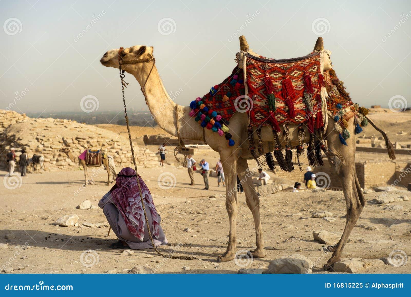 Kameel op woestijn