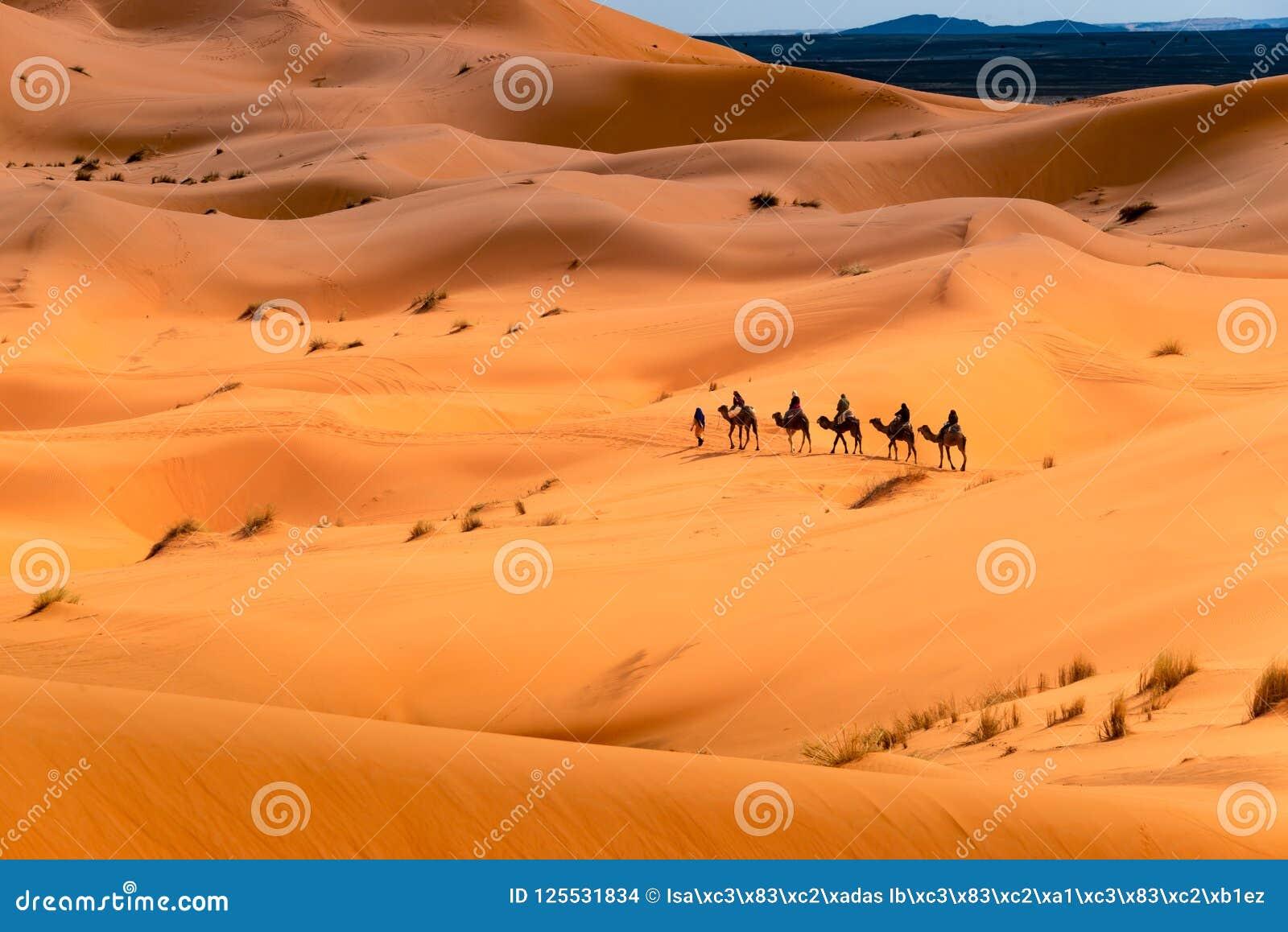 Kameelrit door de woestijn