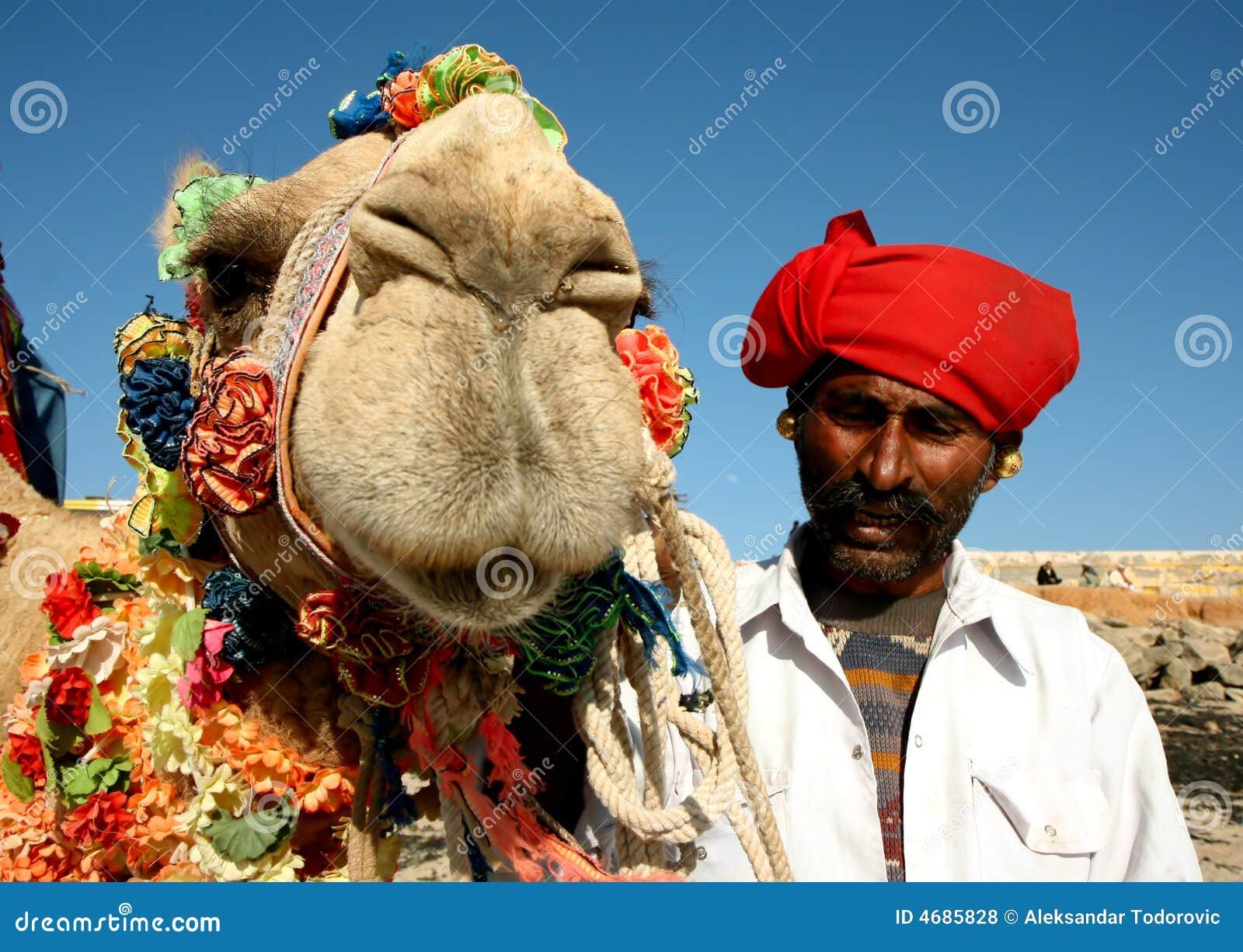 Kamel auf Safari