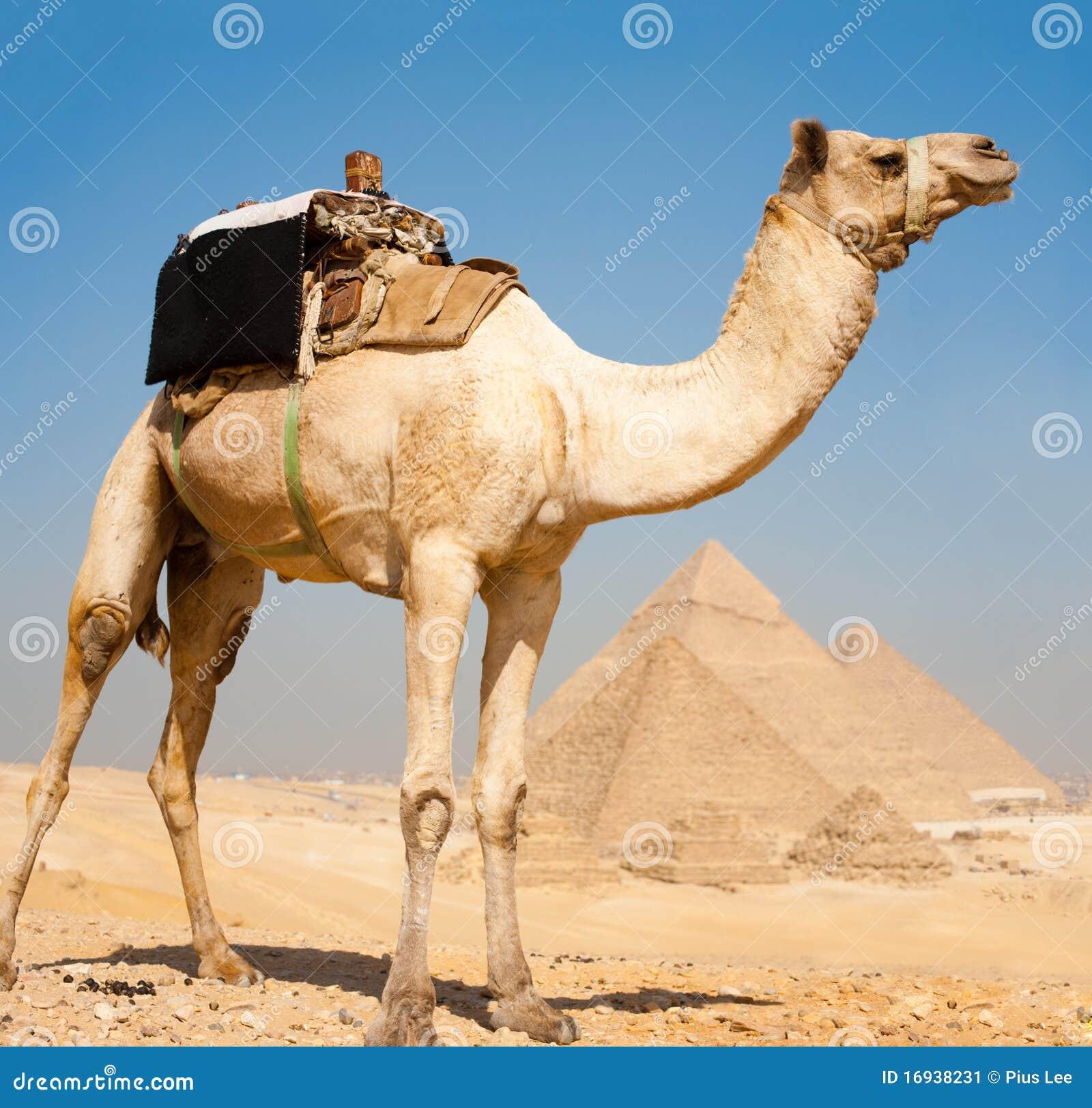 Auf einem hügel der alle pyramiden von giza ägypten übersieht