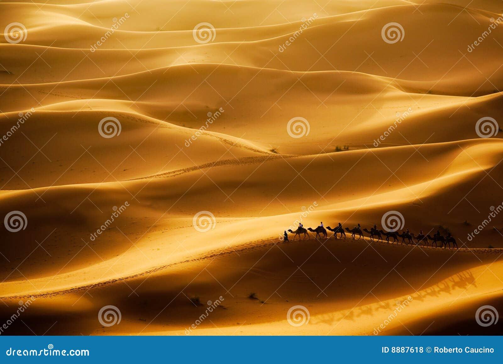 Kamel-Wohnwagen