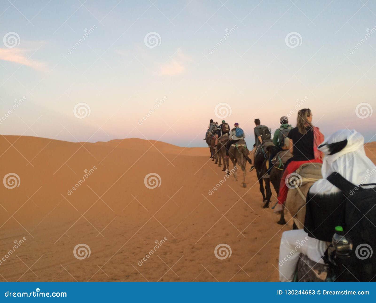 Kamelen die in de zonsondergang berijden
