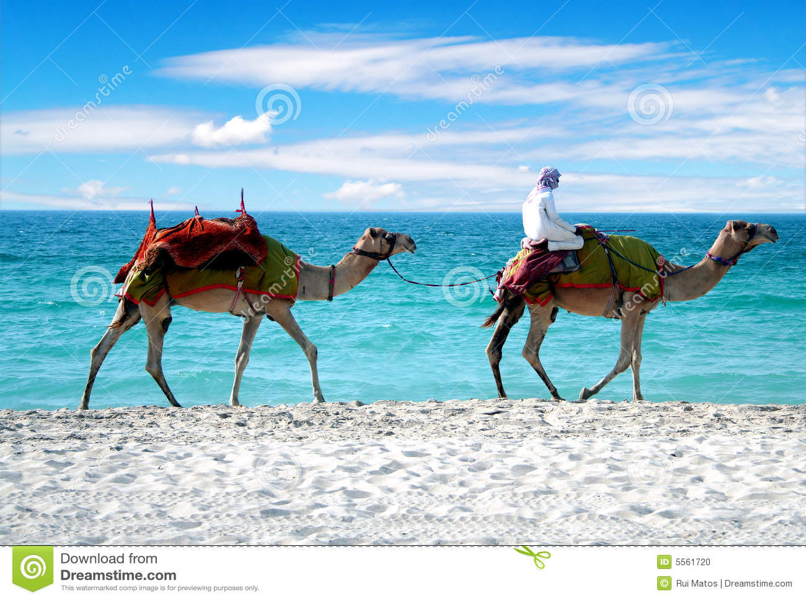 Kamelen op een Strand van Doubai