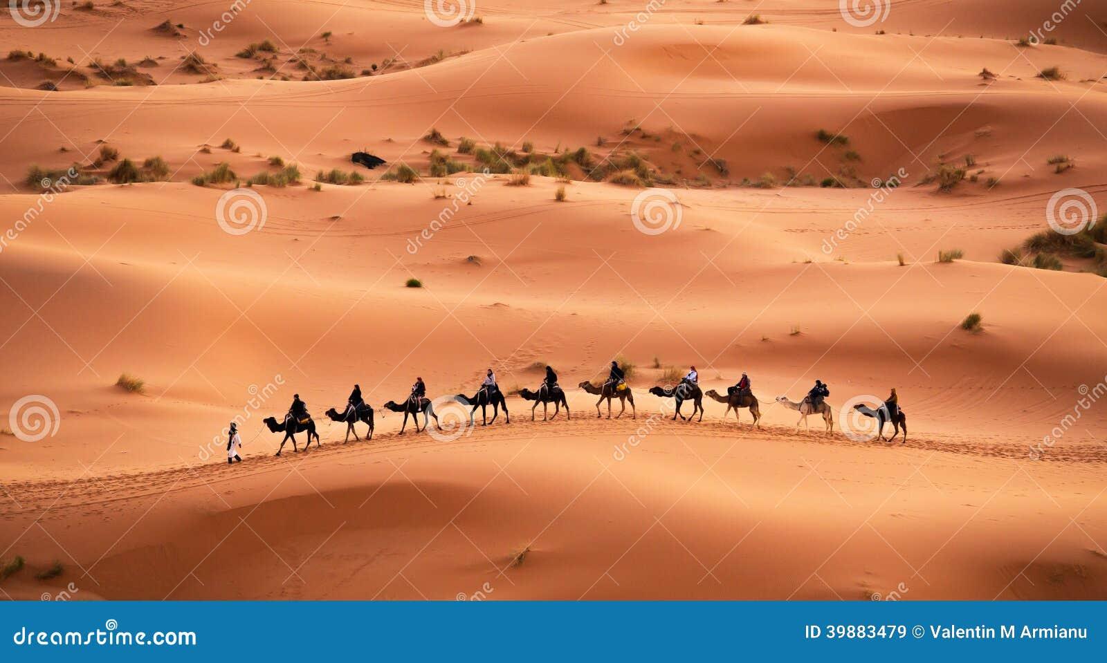 Kamelwohnwagen