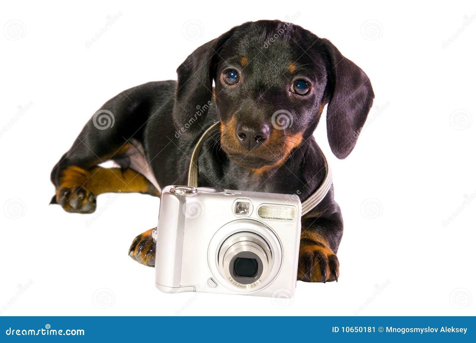Kamerahund