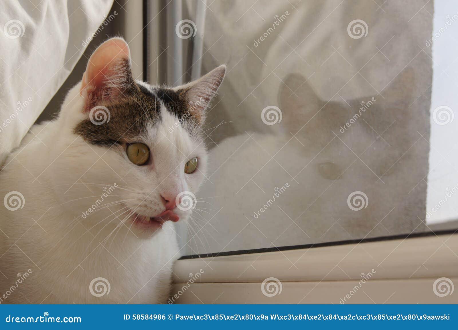 Kami η γάτα - αντανάκλαση παραθύρων