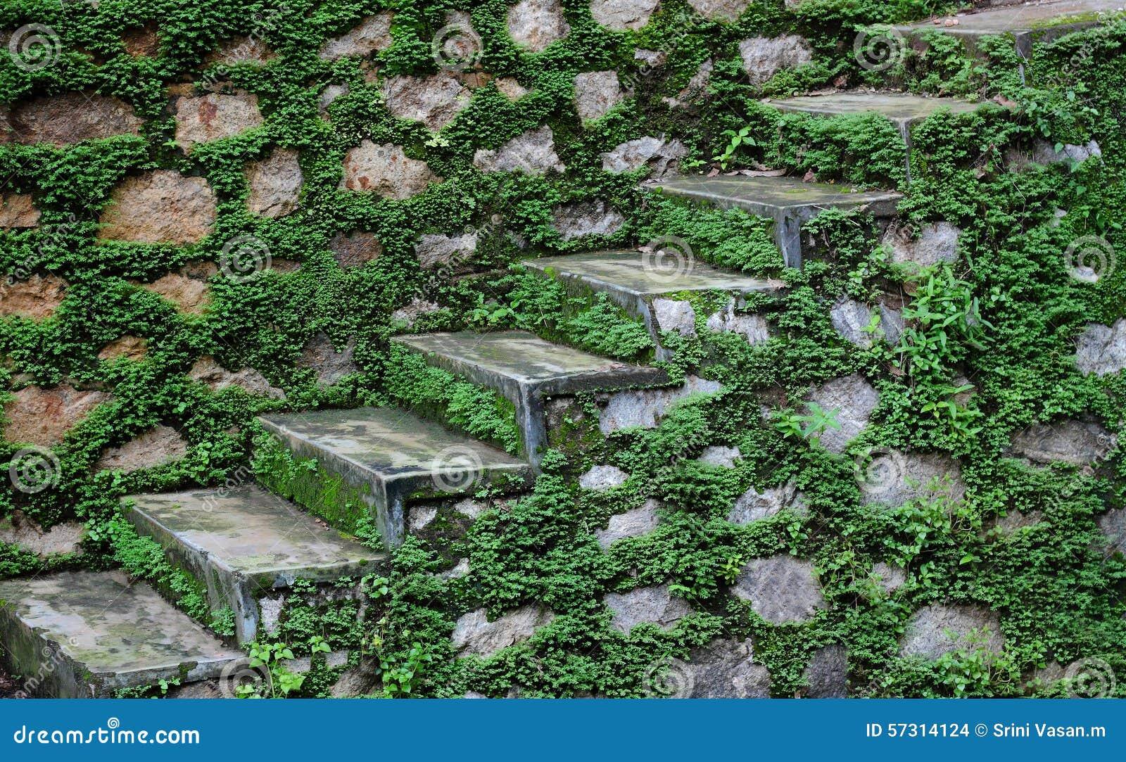 Kamieni kroki po monsunu