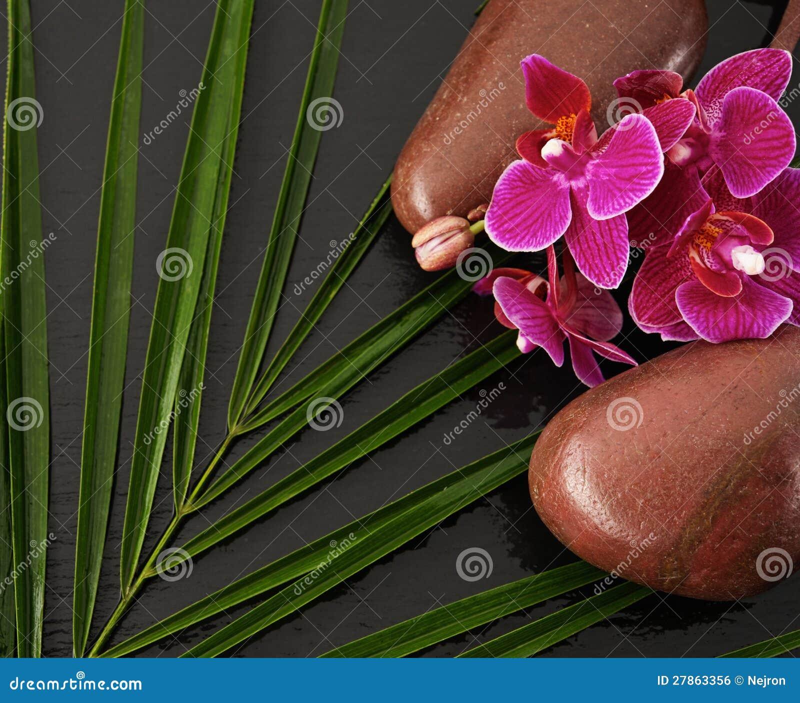 Kamienie i kwiat na czarny tle