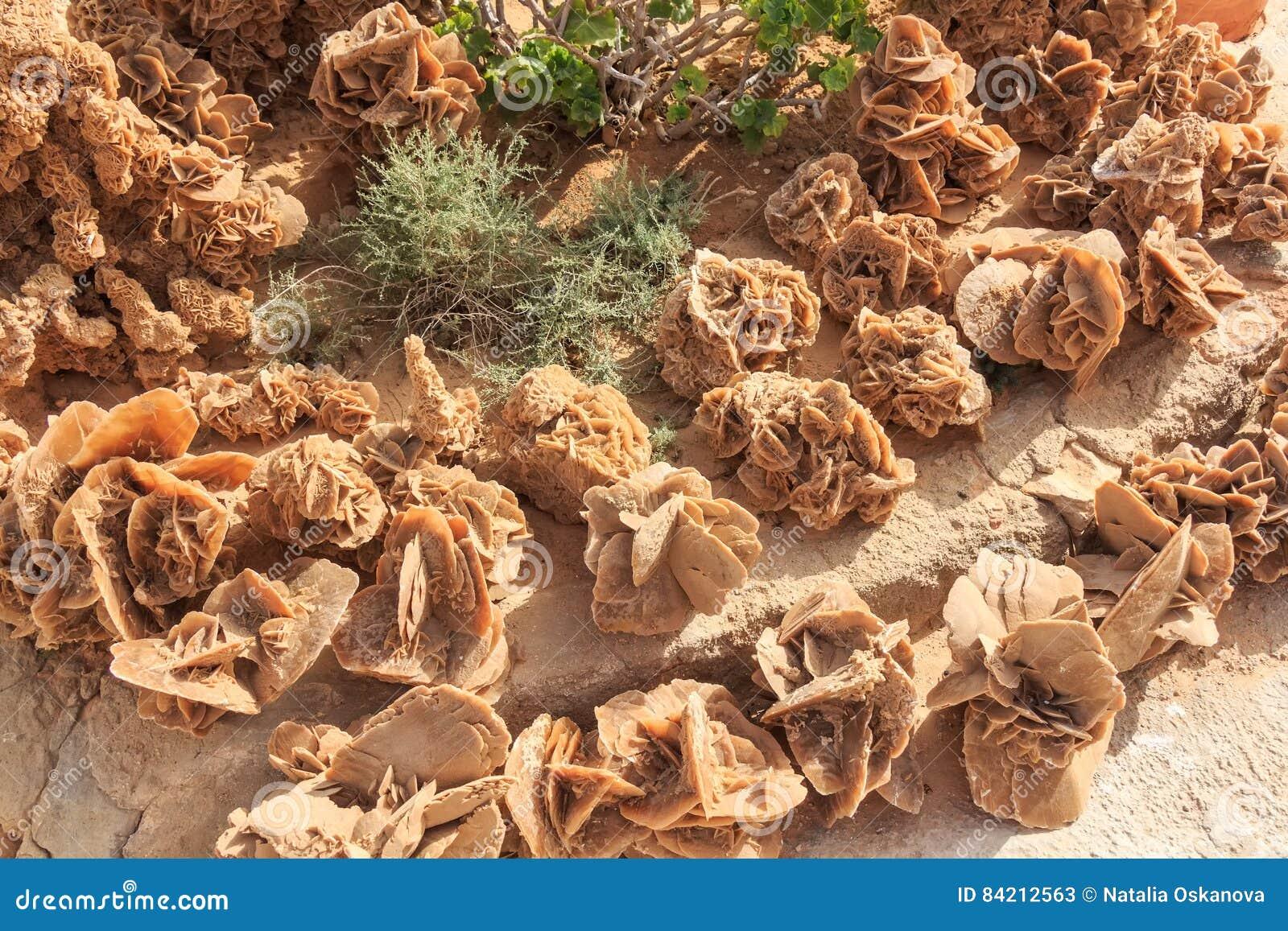 Kamienne pustynne róże
