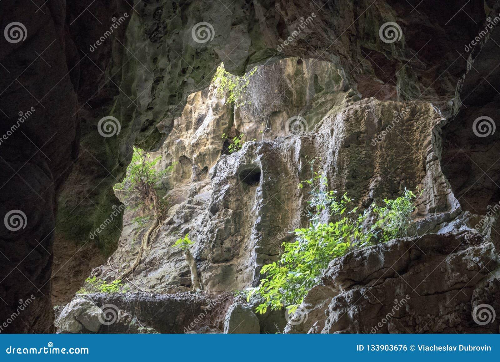 Kamienny jama krajobraz z greenery Antyczny jama widok dżungli lasowa Halna eksploracja w tropikalnej naturze
