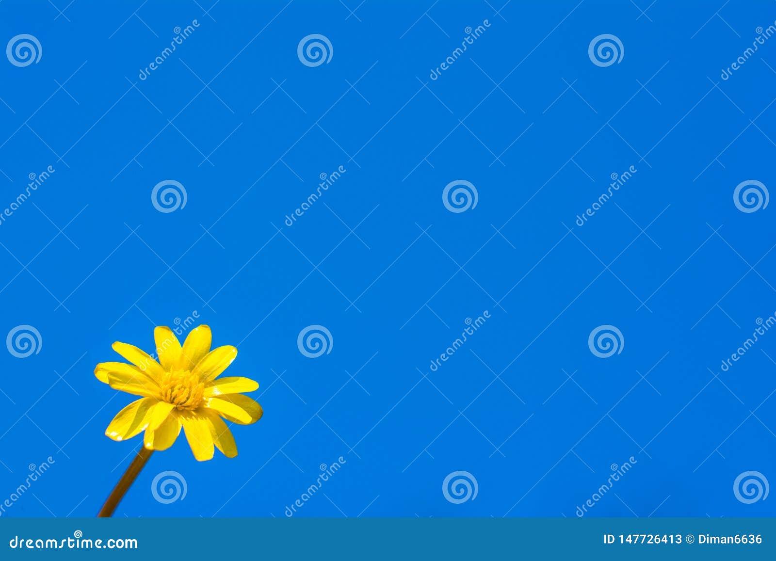 Kamille op de achtergrond van de hemel Copyspace