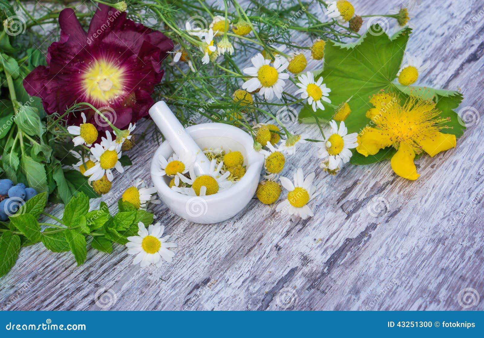 Kamille, St John wort, vrouwemantel, pepermunt