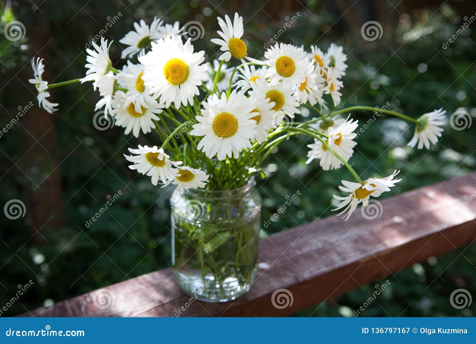 Kamillebloemen op de bank