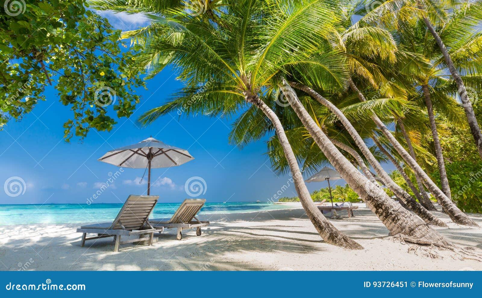 Kamm-MuschelSeashell auf Rosa Schöne Strandlandschaft Tropische Naturszene Palmen und blauer Himmel Sommerferien und Ferienkonzep