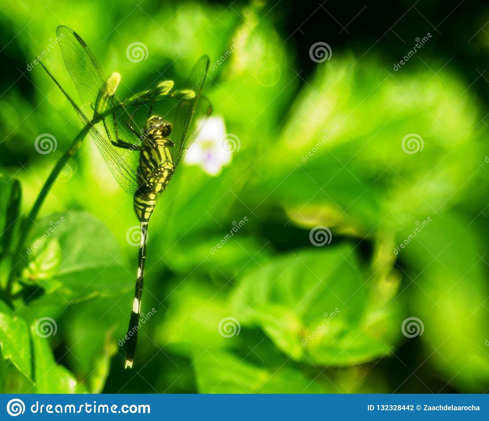 Kamouflage av en grön slända