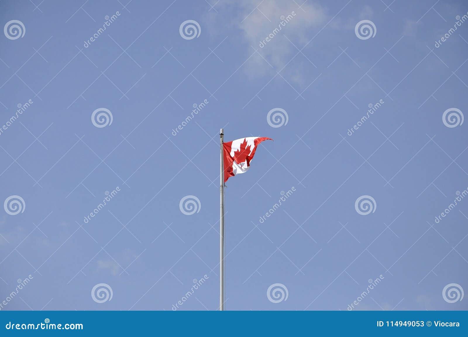 Kanadyjczyk flaga w wiatrze