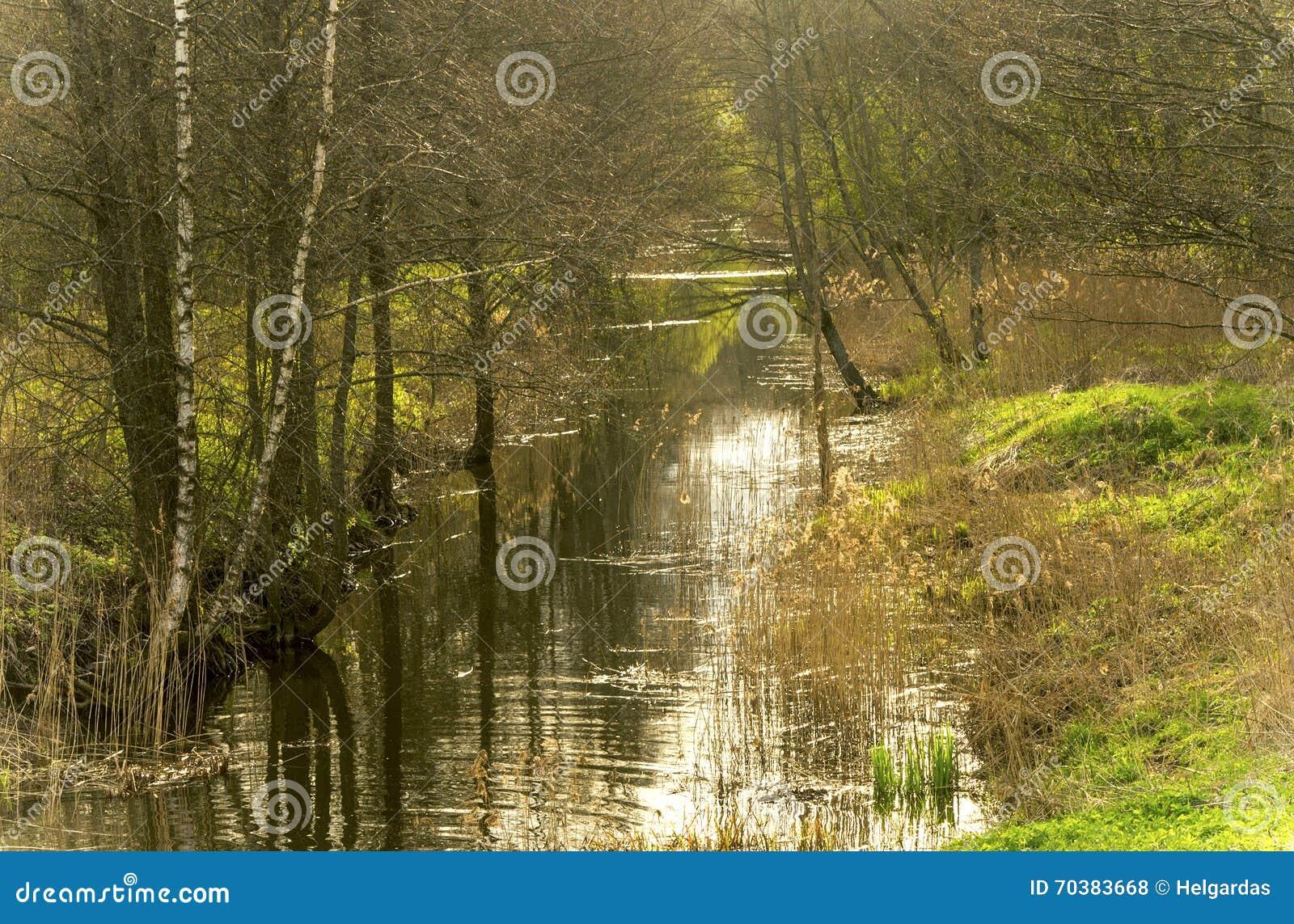 Kanal i en skog
