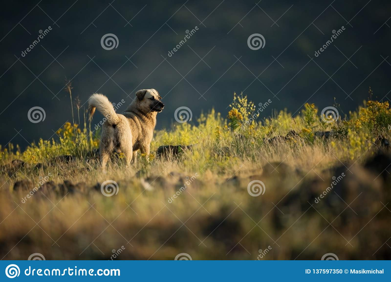 Kangal. The wild nature of Bulgaria. Free nature. A beautiful picture of nature. Rhodopes. Mountains in Bulgaria. European wildlif