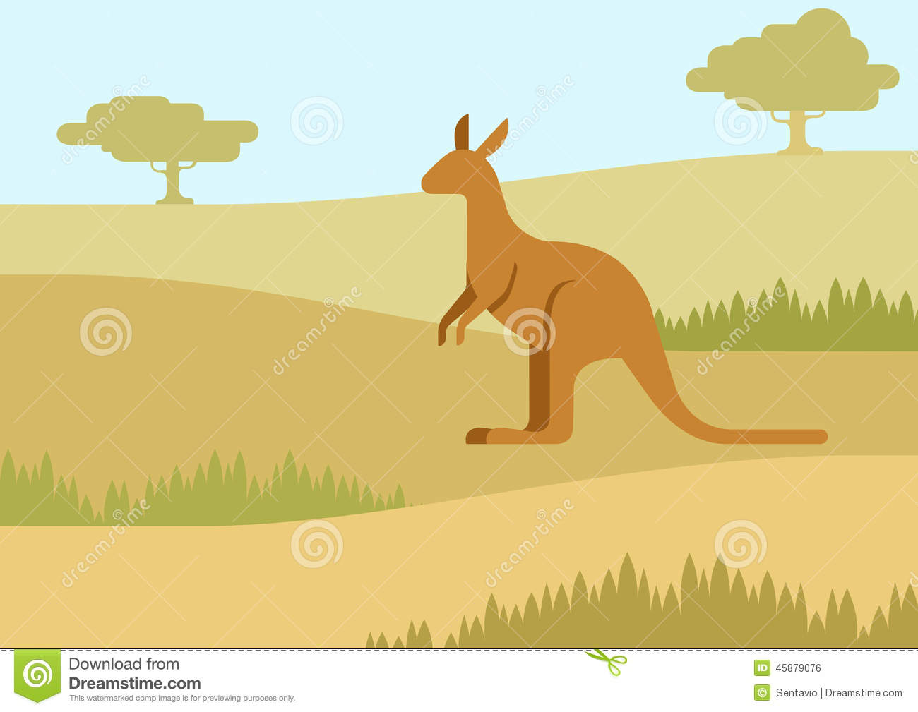 Kangaroo Natural Habitat Kangaroo in the natural
