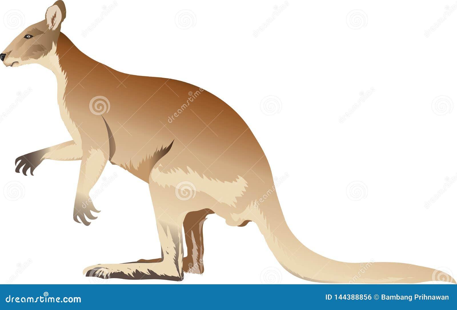 Kangur lub Wallabi Boczny widok - Wektorowa ilustracja