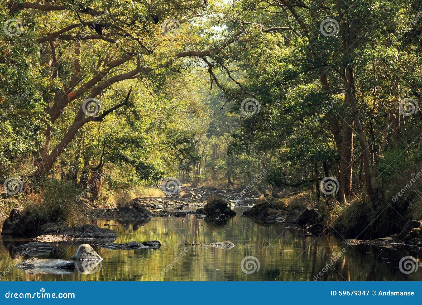 Download Kanha National Park stock image. Image of tiger, pradesh - 59679347