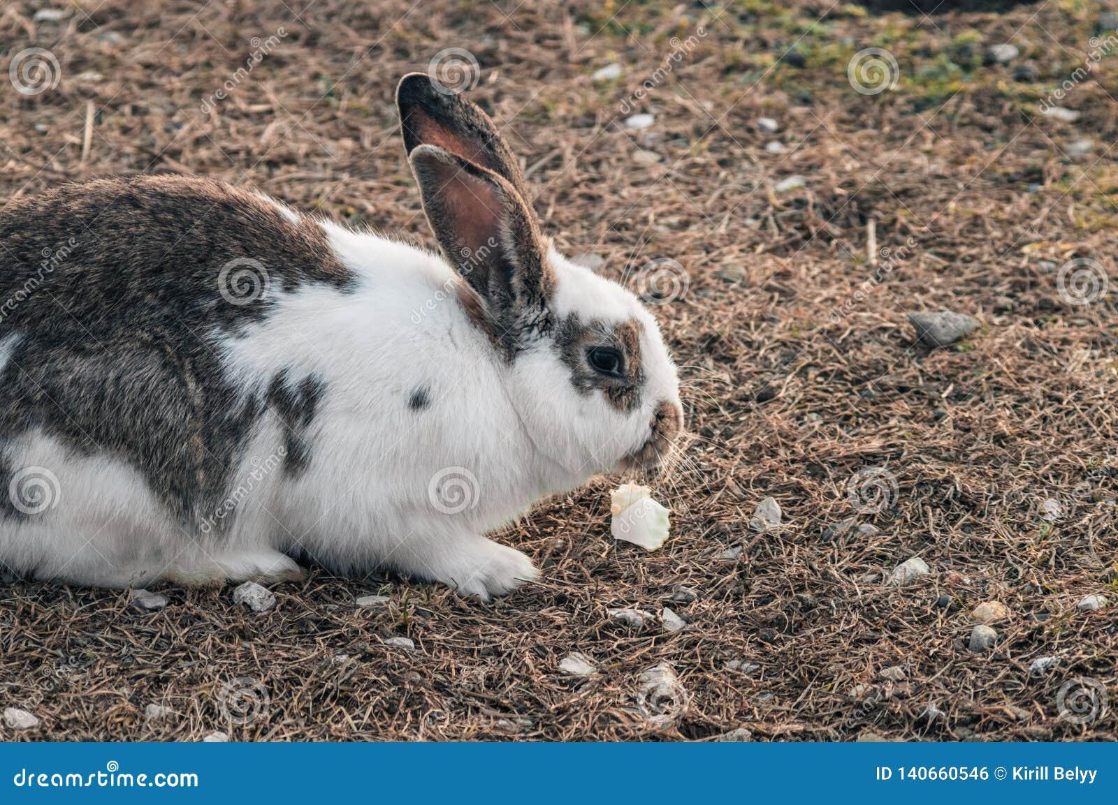 Kanin i parkerar på gräset