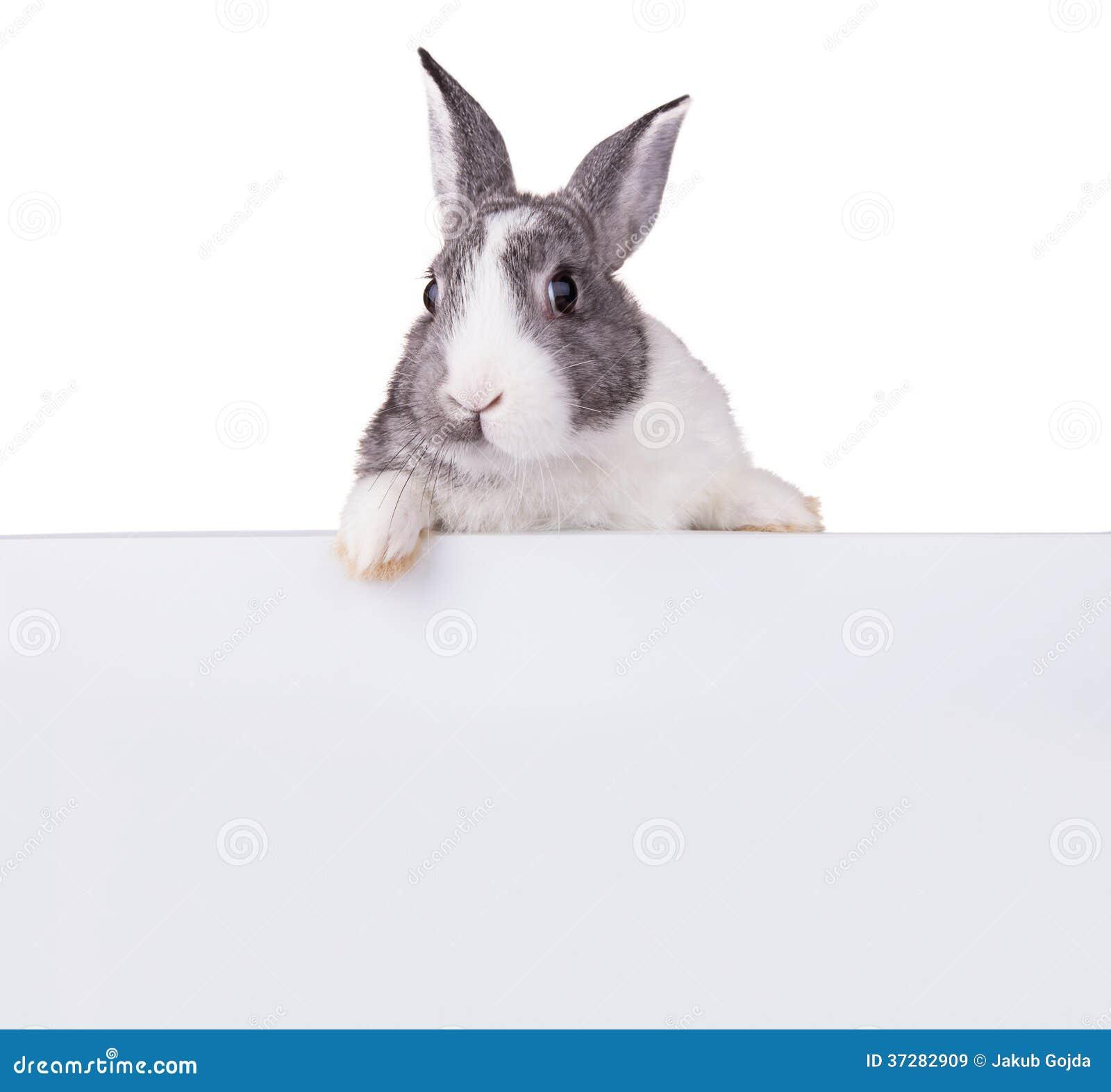 Kanin med det tomma arket på vit bakgrund