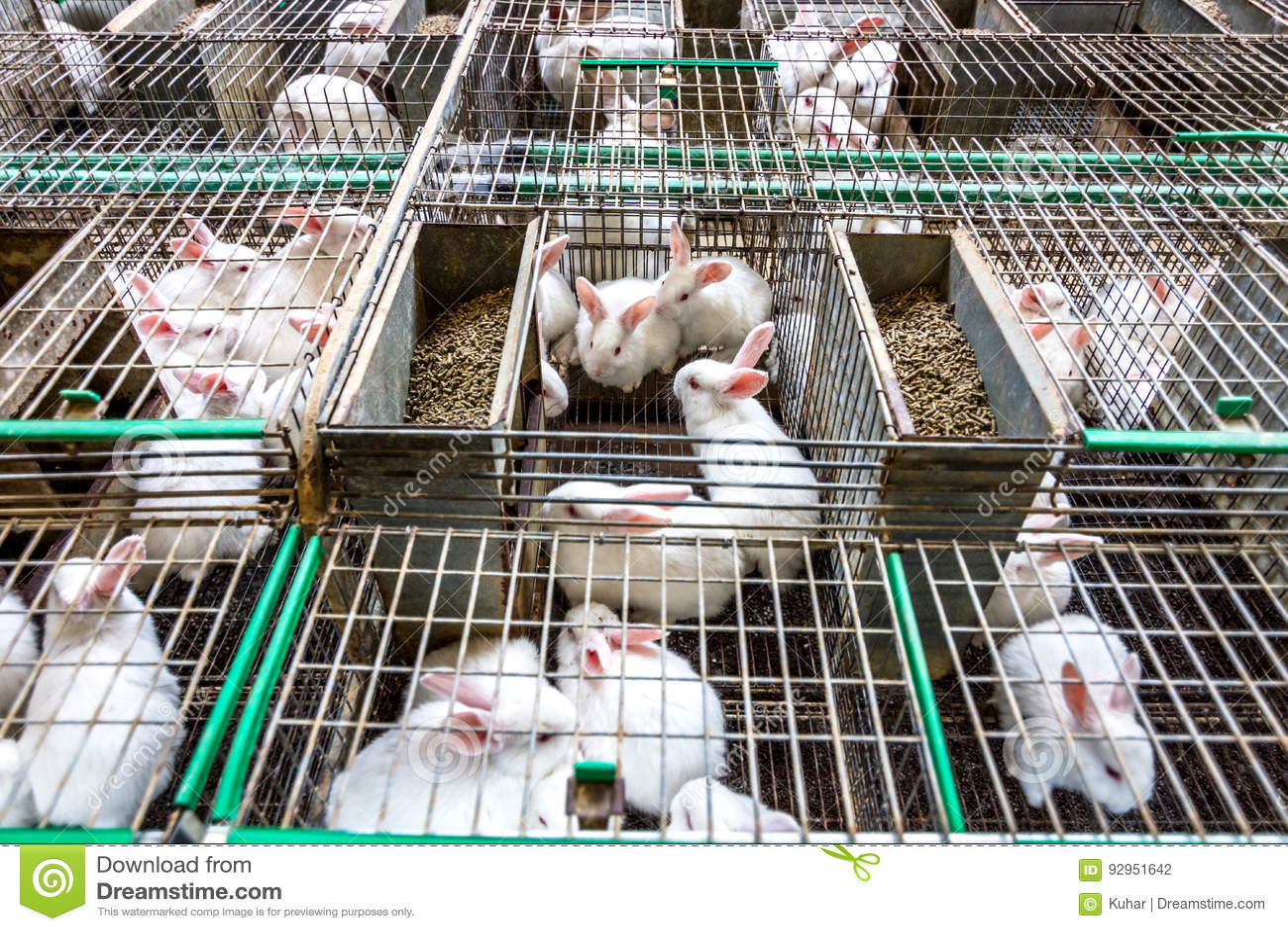 Kaninchen auf dem Bauernhof