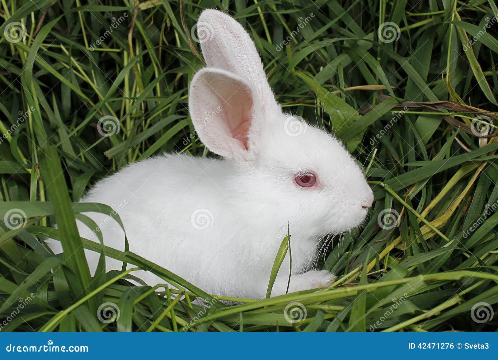 Kaninchen sitzt auf dem gemähten Gras