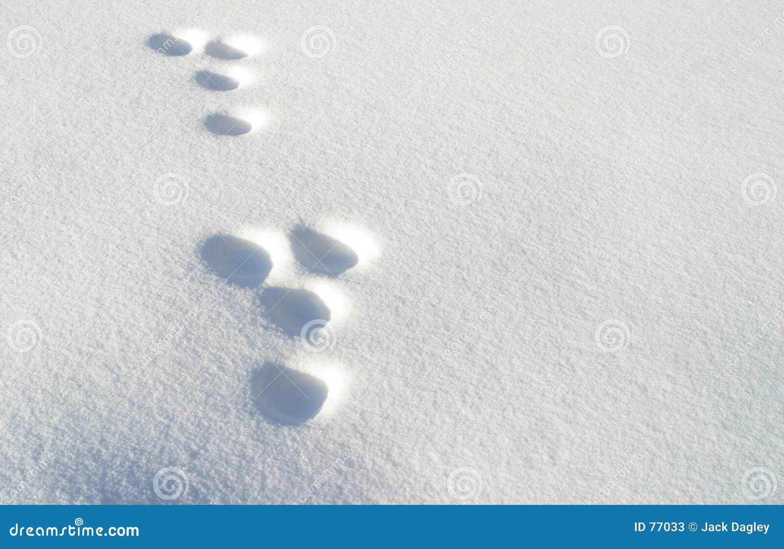 Kaninchenabdrücke im Schnee