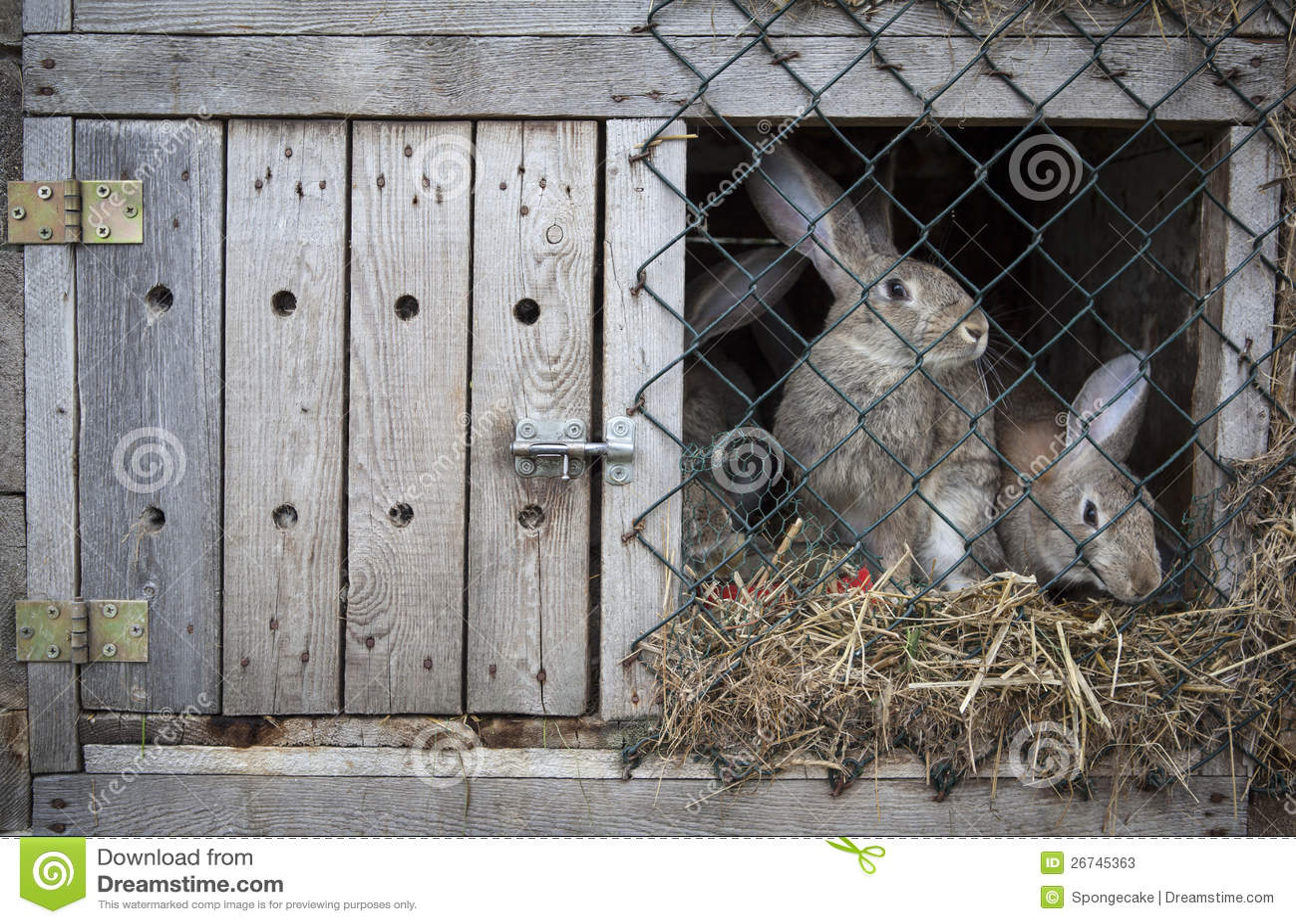 Kaniner i en hutch