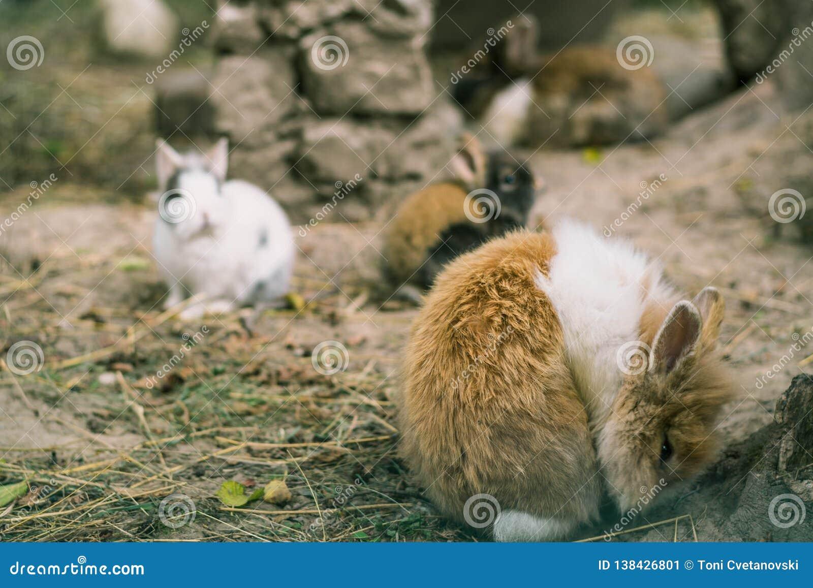 Kaniner Små kaniner