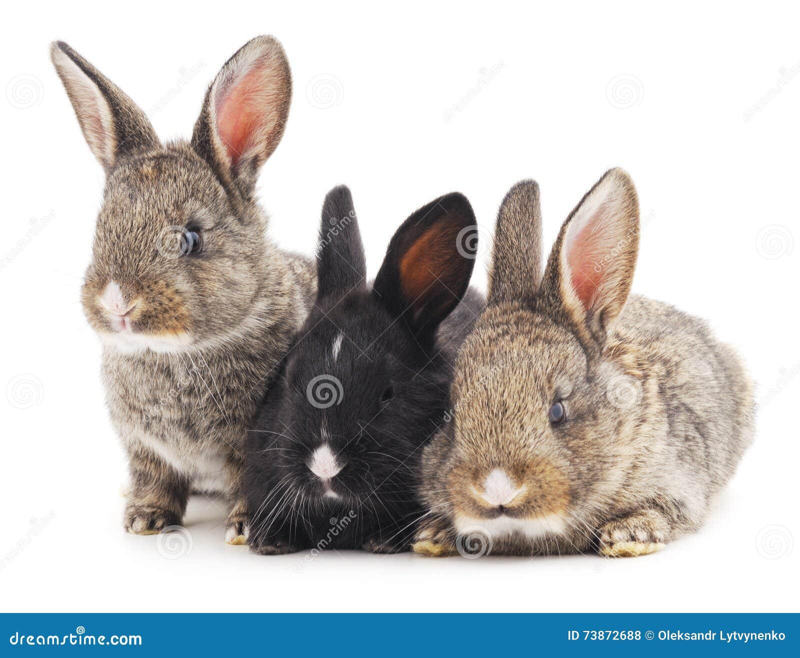 Kaniner tre