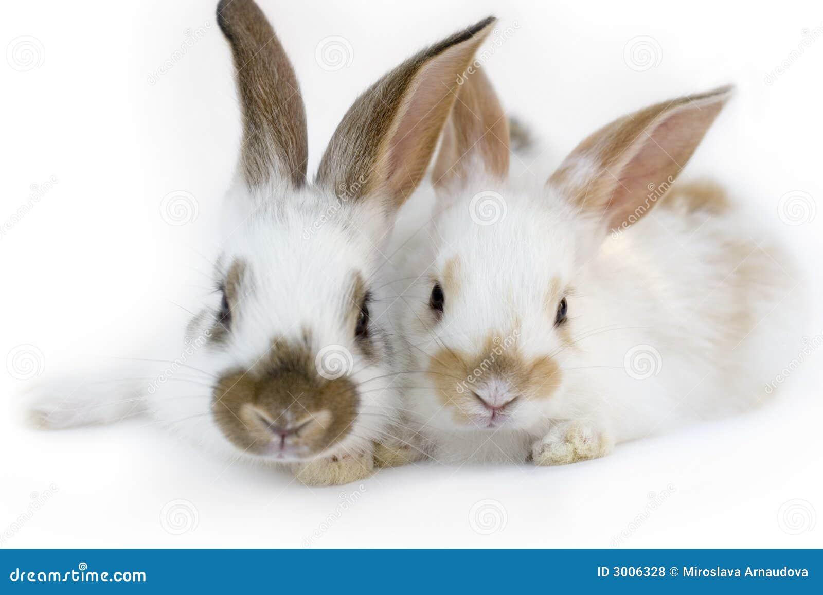 Kaniner två