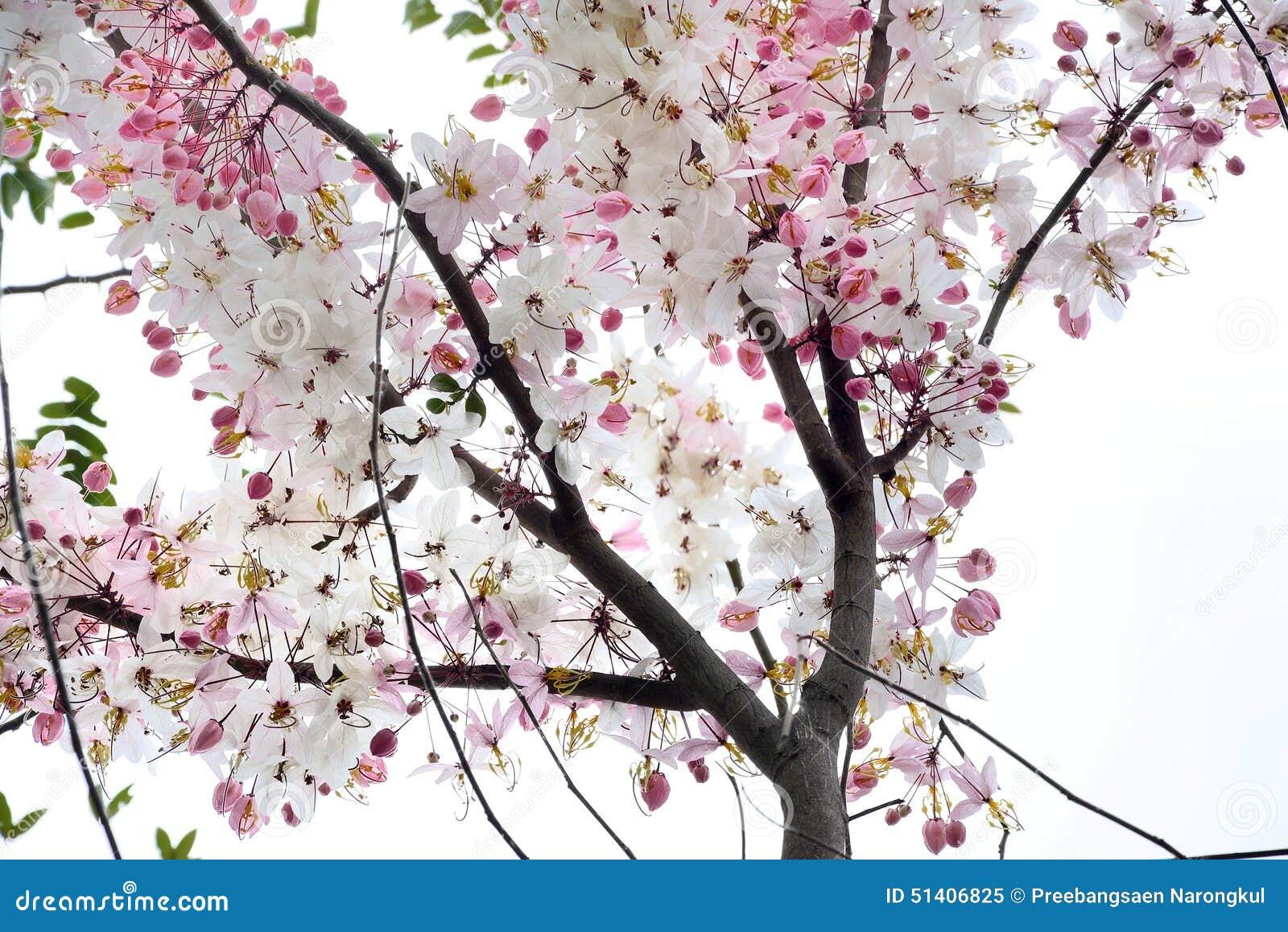 Kanlapaphruekbloemen