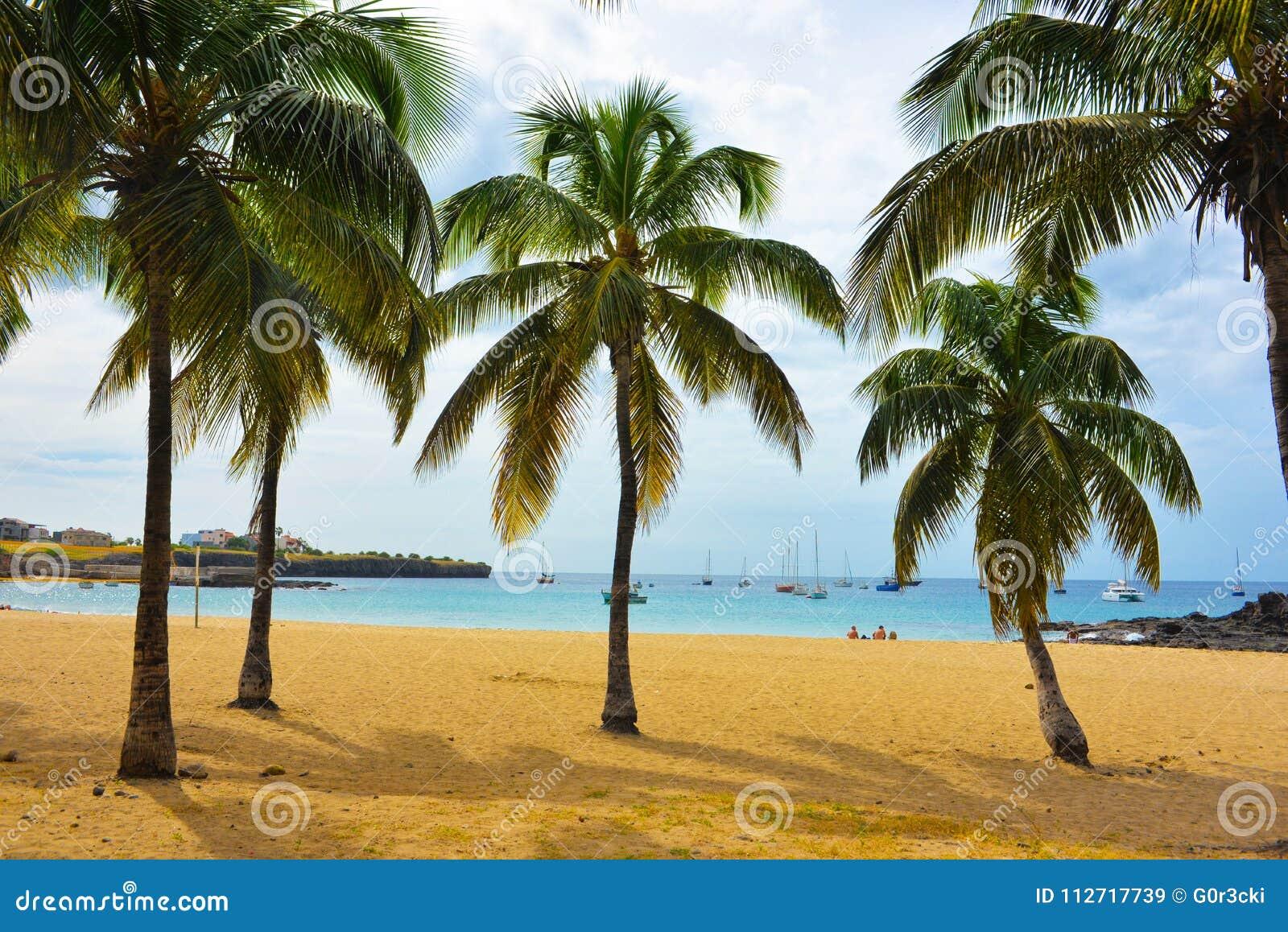 Kap Verde Tarrafal fjärdstrand, kokosnötträd på sand, tropiskt landskap - Santiago Island