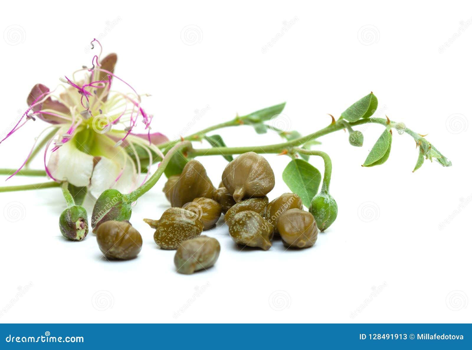 Kapary, zieleń liście i kapar, kwitną na bielu