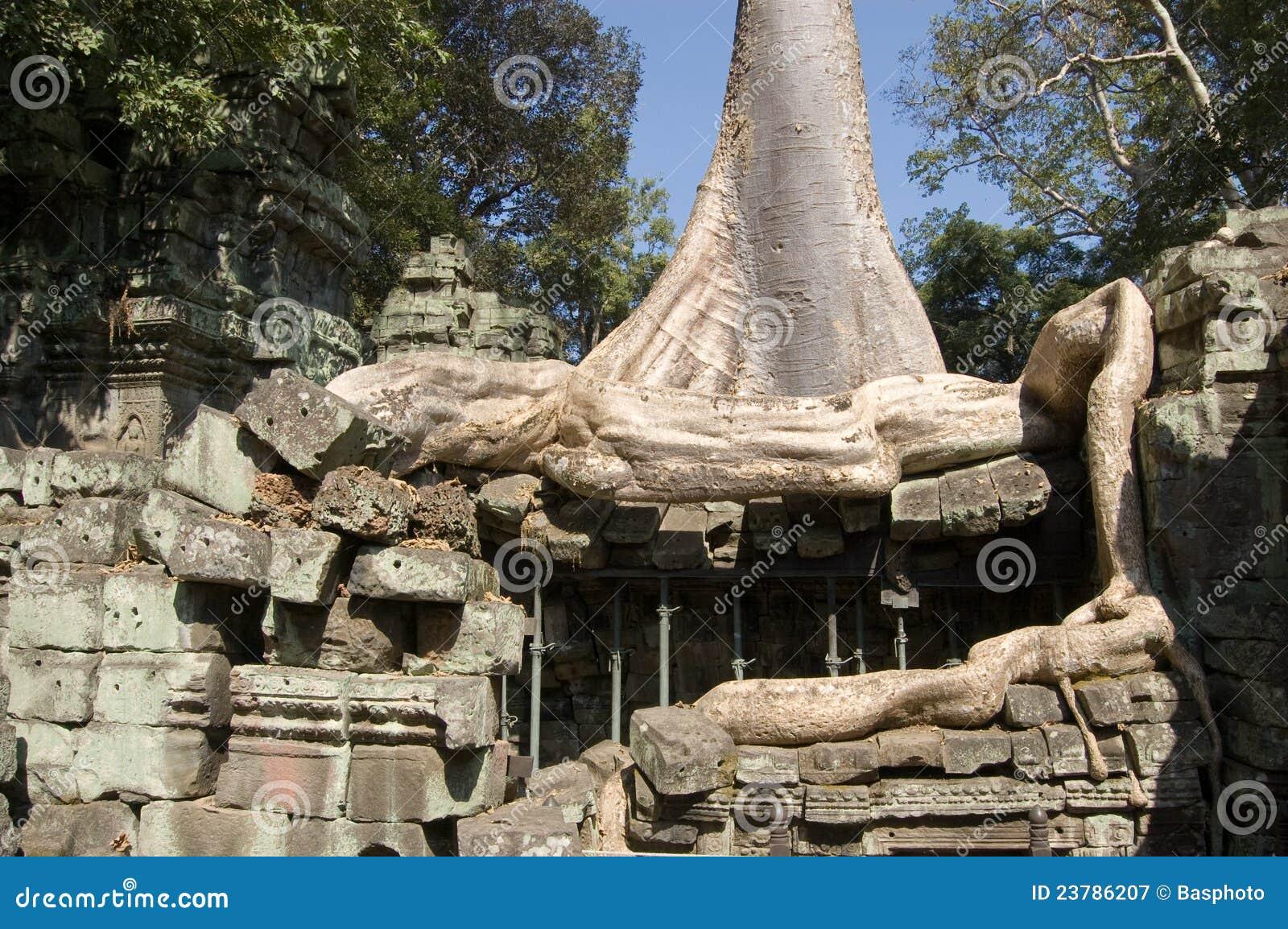 Wat Is Kapok.Kapok Tree And Ancient Ruins Stock Image Image Of Kapok