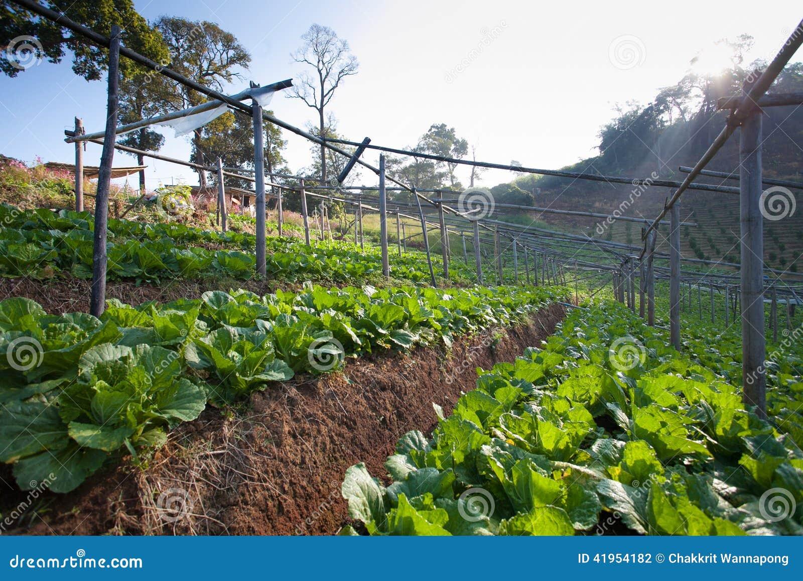 Kapuściany ogród na górze