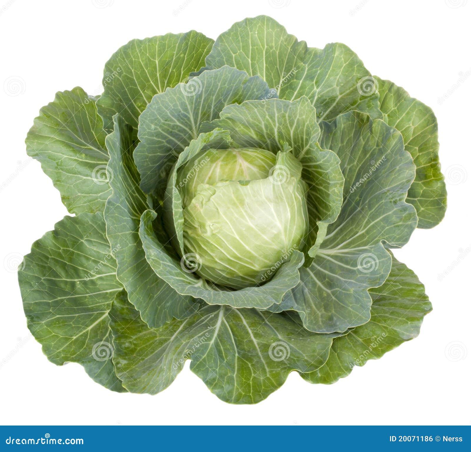 Kapuściany warzywo