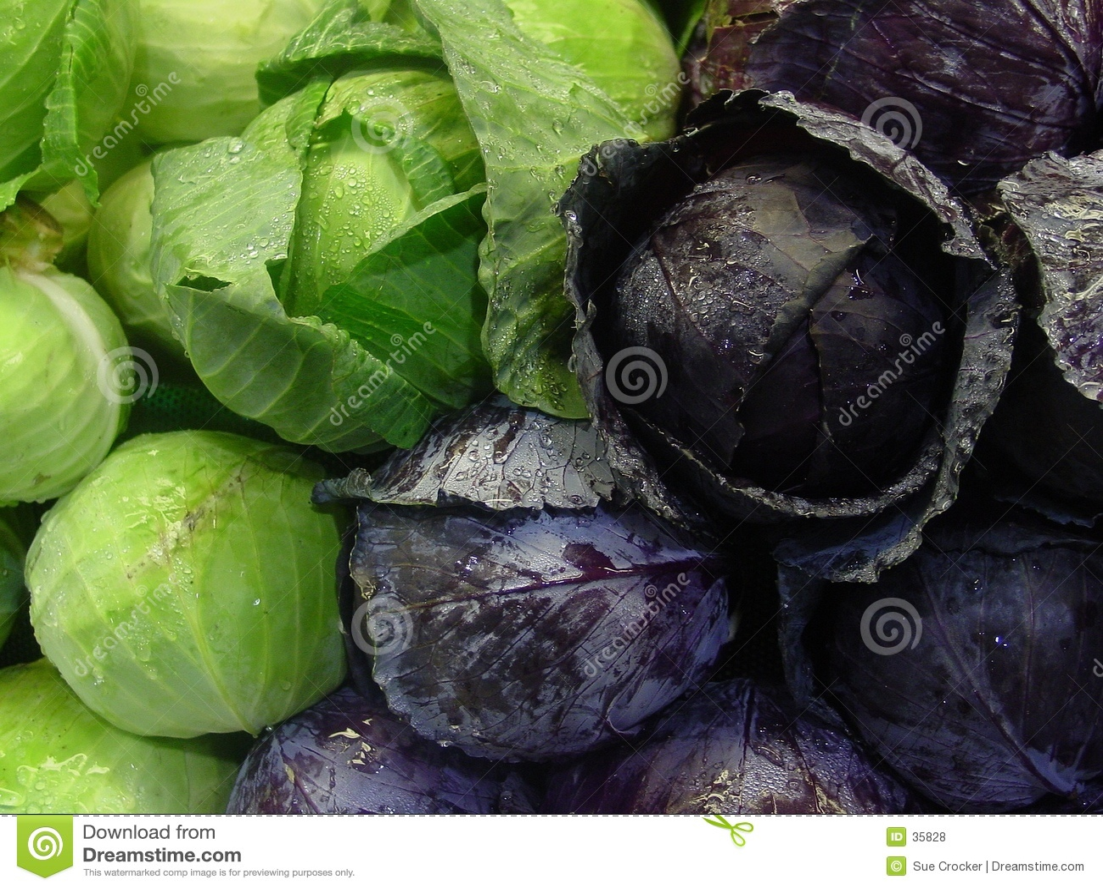 Download Kapusta zielona czerwony zdjęcie stock. Obraz złożonej z grocery - 35828