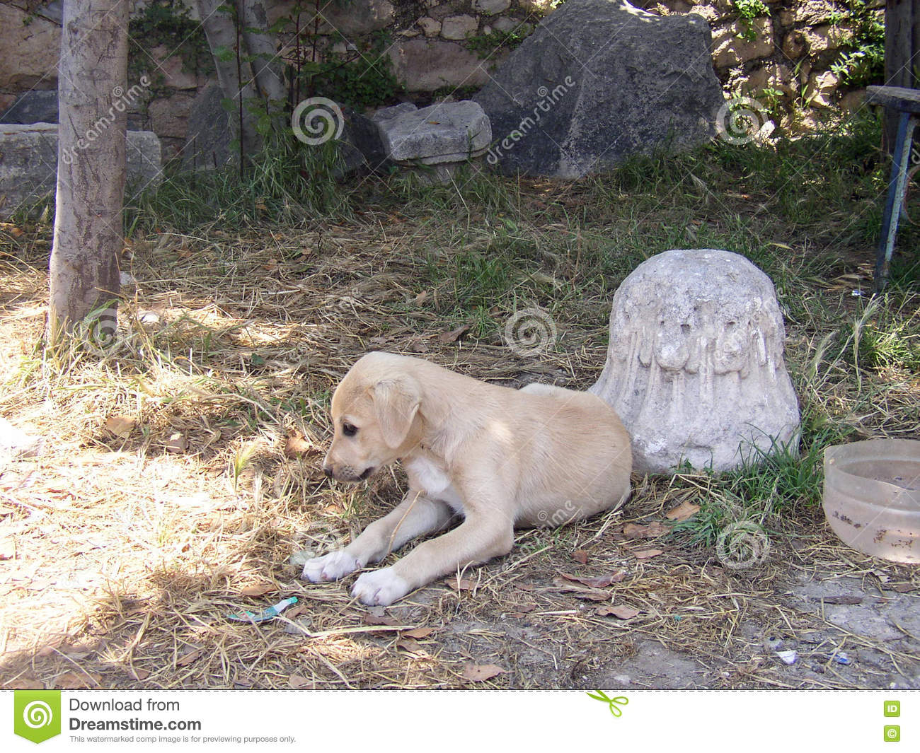 Karabash Cangal Anatolian Shepherd Puppy Famous Race Which Exports Turkey Prohibited Dogs  Remembers C Different Faces Major 82543538